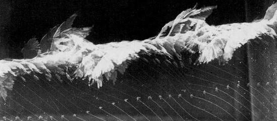 Etienne-Jules-Marey-Flight-of-gull-1886i